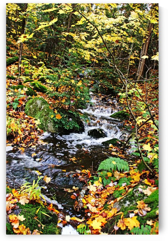Hidden Waterfalls In The Fall Forest by Deb Oppermann