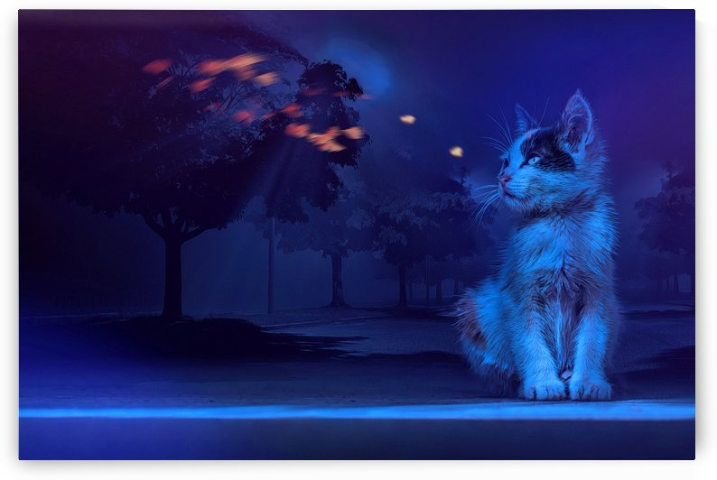Stray kitten and the fireflies by Elizabeth Berry