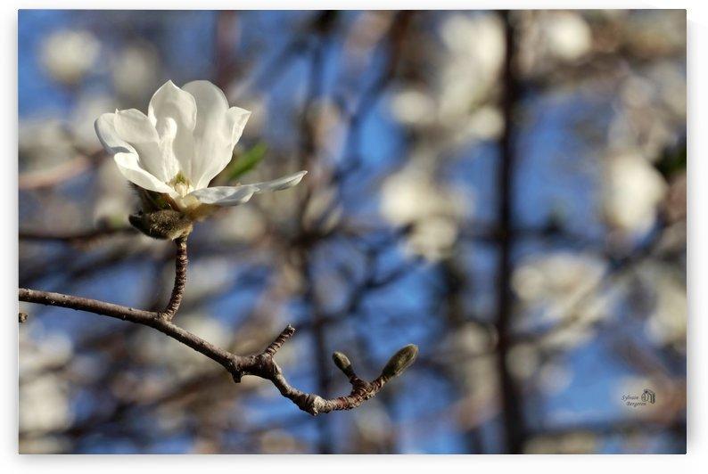 Printemps- Spring time ete by Sylvain Bergeron Photographies