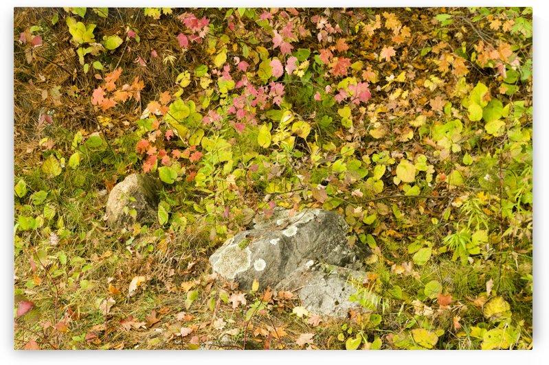 Autumn on Pink Lake 5 by Bob Corson