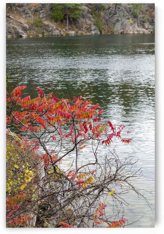 Autumn on Pink Lake 12 by Bob Corson