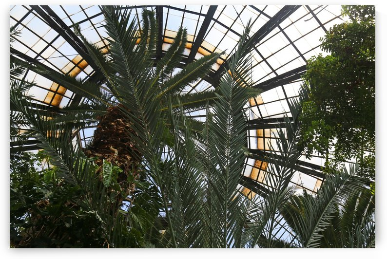 Bell Isle Conservatory Dome 1 by Mary Bedy