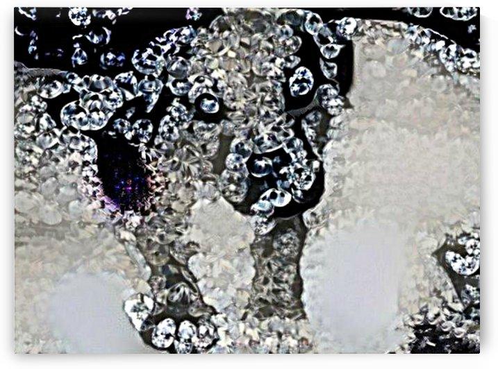 Diamond Dog  by Ngan Hong Truong