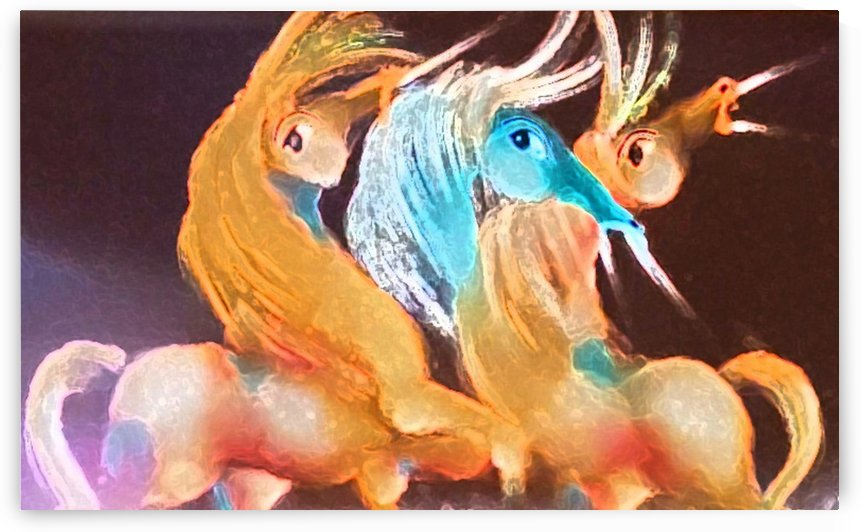 Colorful Rhapsody by David Berkowitz Chicago