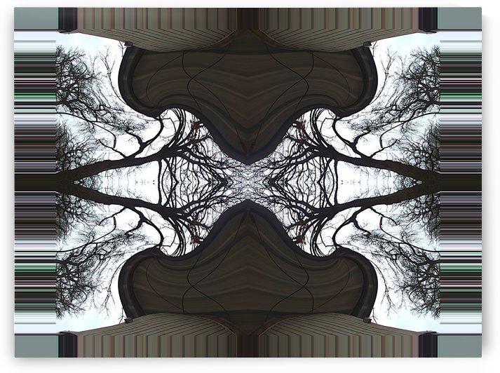 A.P.Polo - Tree Barcode by A P Polo