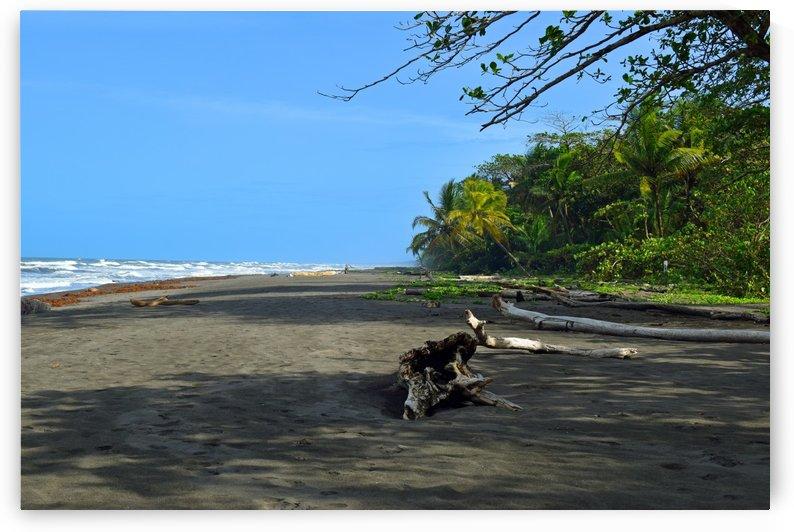 Beach of Costa Rica by Senthia Sanders