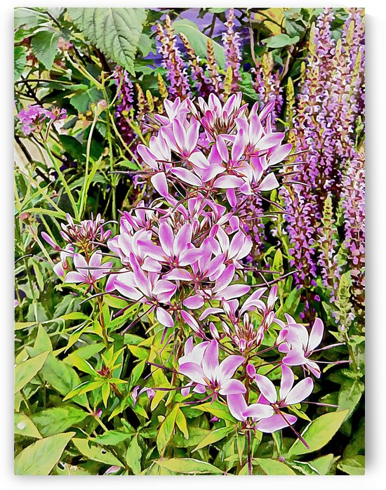 Violet Floral Tribute by Dorothy Berry-Lound