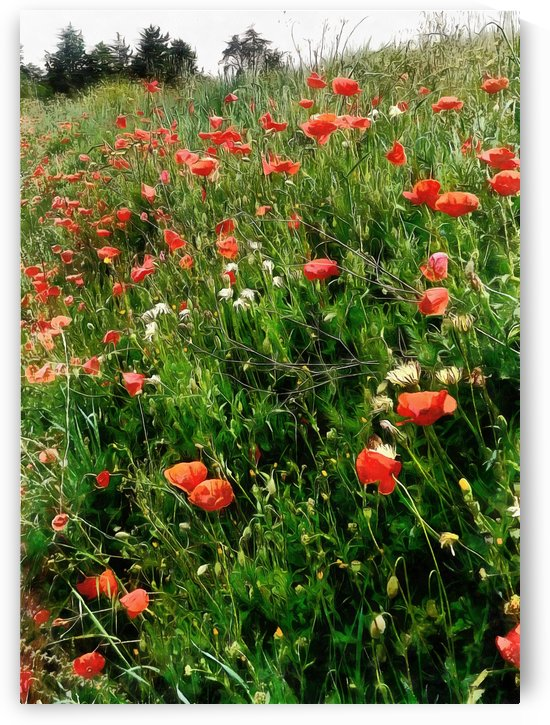 Poppies in the Landscape by Dorothy Berry-Lound