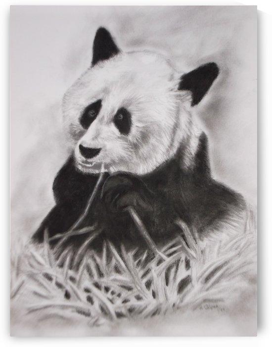 Panda by Hazel Calpee