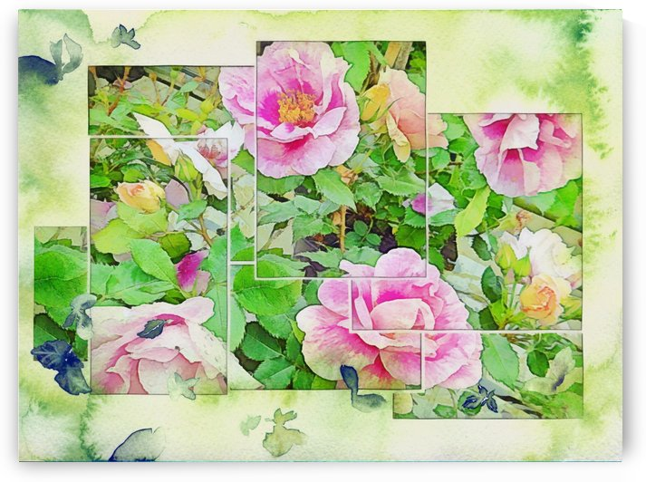 Soft Rose Fragments by Dorothy Berry-Lound