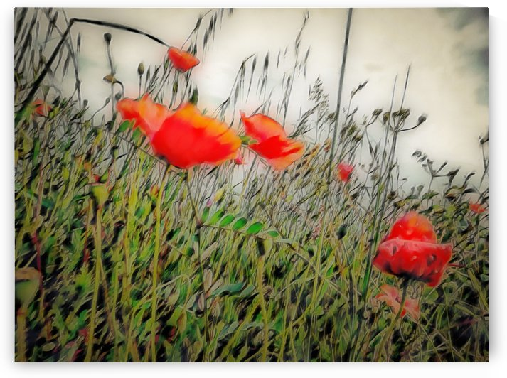 Soft Poppy Dreams by Dorothy Berry-Lound