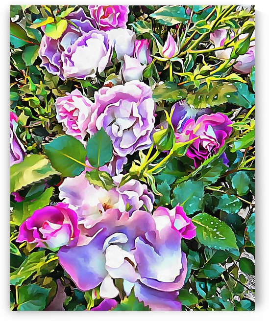 Soft Lilac Rose by Dorothy Berry-Lound