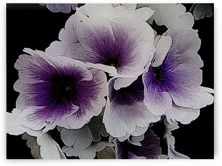 Vainglorious Violet by Dorothy Berry-Lound