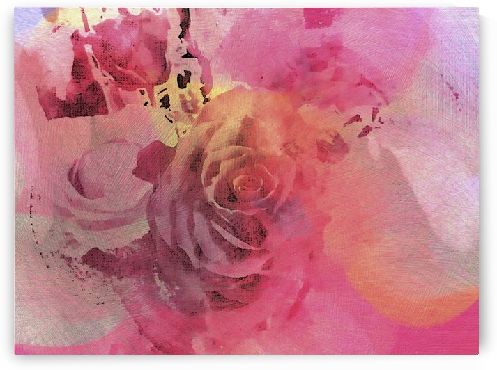 June Rose by Dorothy Berry-Lound