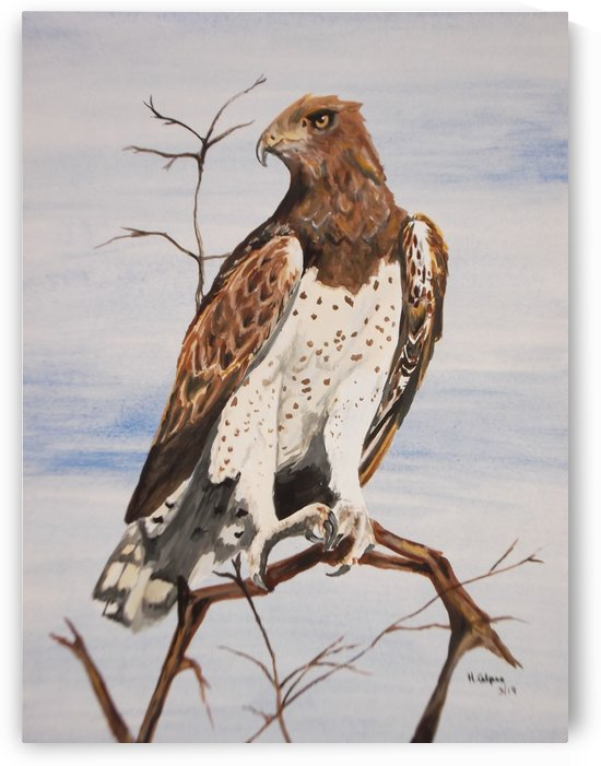 Martial Eagle by Hazel Calpee