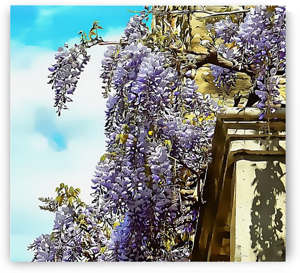Wisteria Cascade by Dorothy Berry-Lound