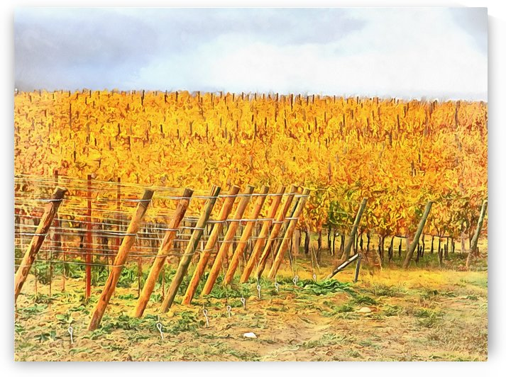 Grape Vines in Autumn by Dorothy Berry-Lound