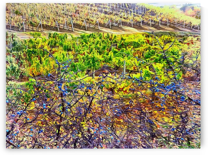 Tuscan Autumn Contrasts by Dorothy Berry-Lound