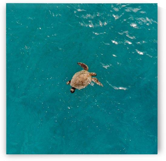 Turtle by 808N4K