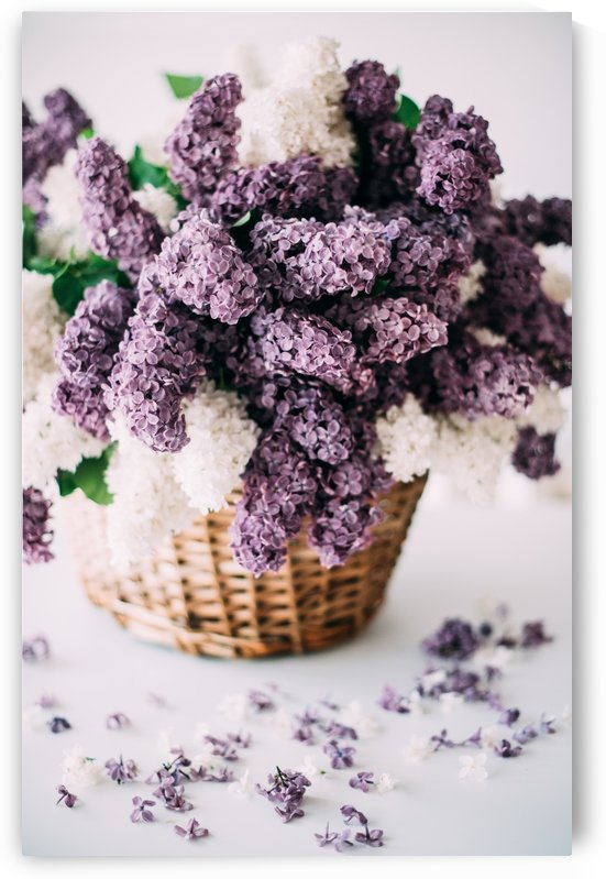 Lilac in a basket by Daria Minaeva