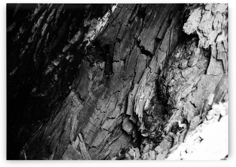 Black timber by Daria Minaeva