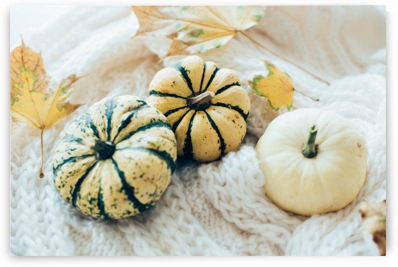 Three pumpkins by Daria Minaeva