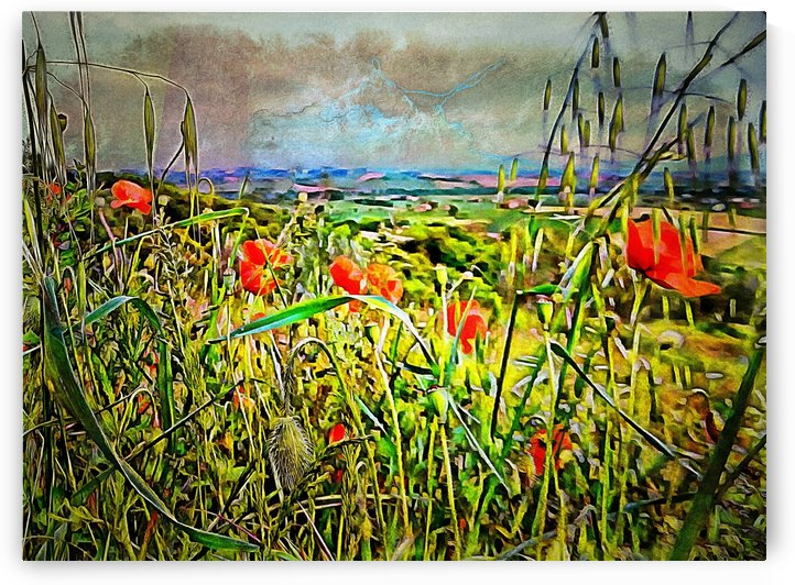 Poppies Awaiting The Storm by Dorothy Berry-Lound