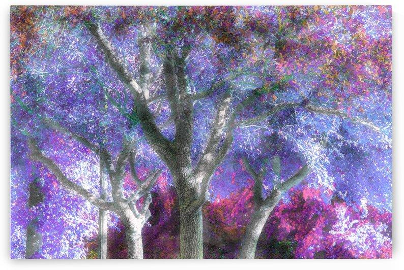 Muted Treetops by Ellen Barron O-Reilly