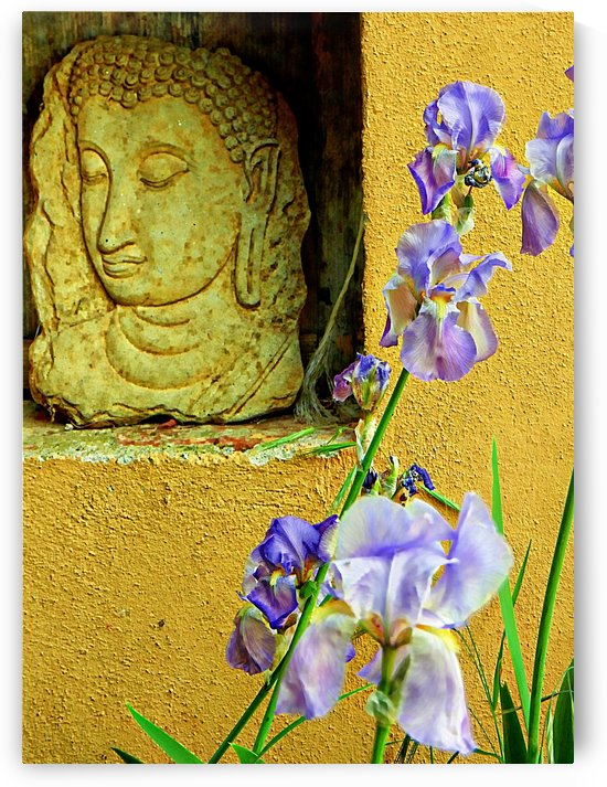 Buddha and the Iris by Dorothy Berry-Lound