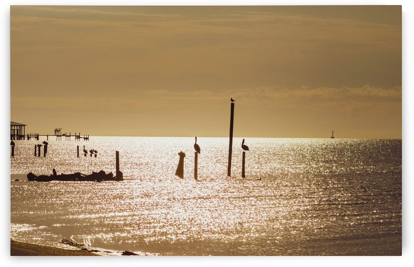 Birds resting at Dauphin Island by Juvelyn Green