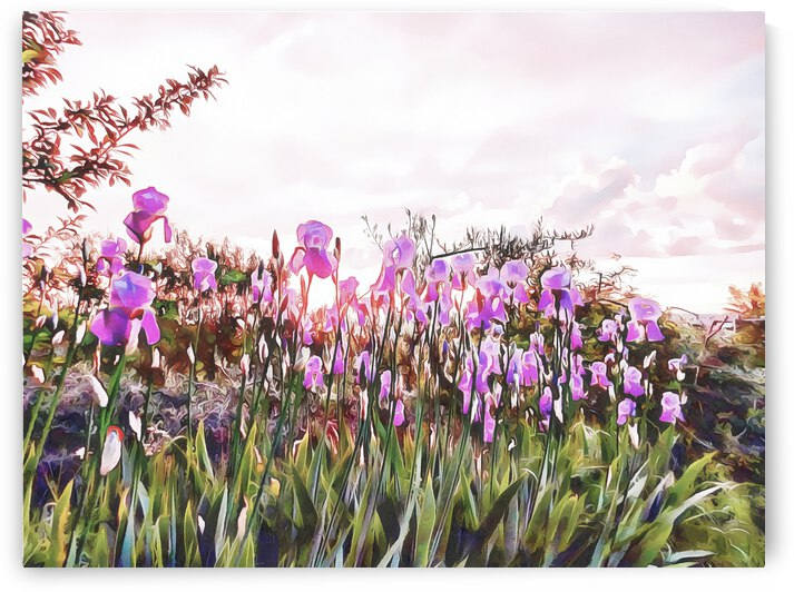 Magical Iris Sunset by Dorothy Berry-Lound
