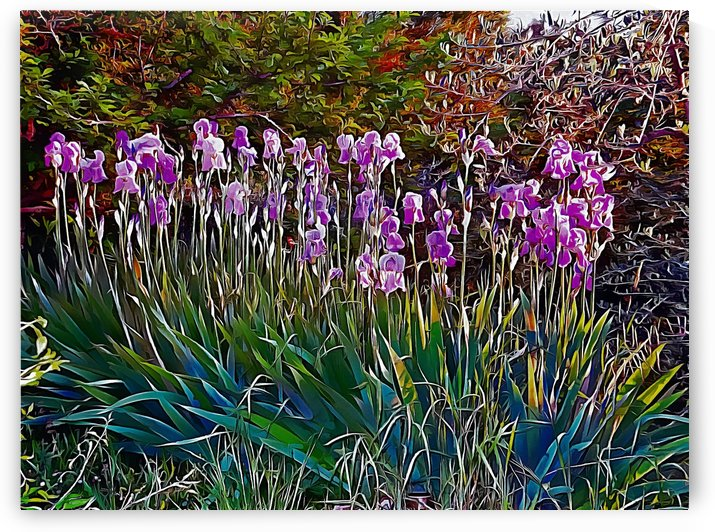Impressions Of An Iris Sunset by Dorothy Berry-Lound