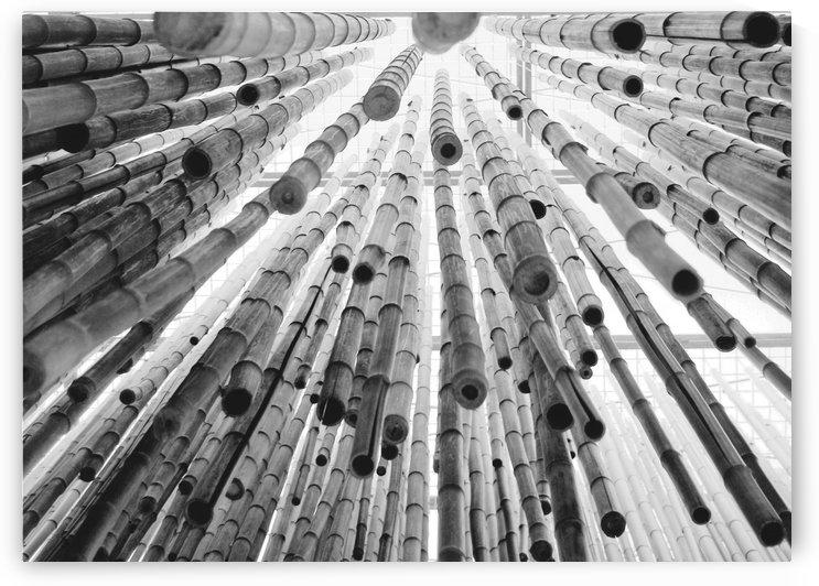 bamboo falling by Luigi Girola