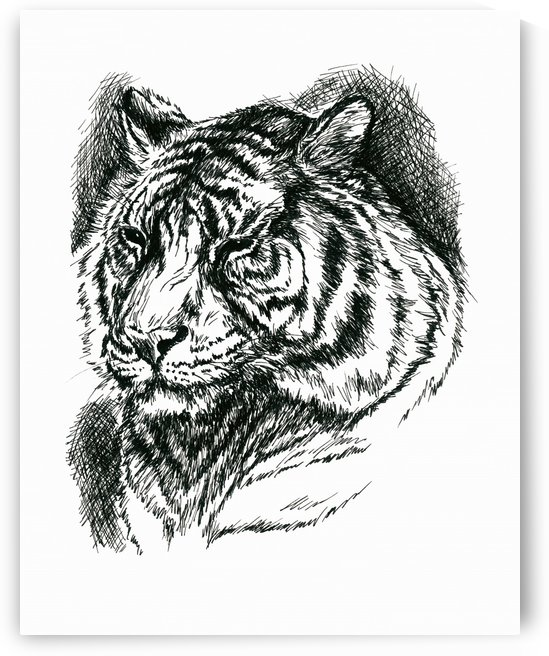 Tiger Portrait Ink by MM Anderson