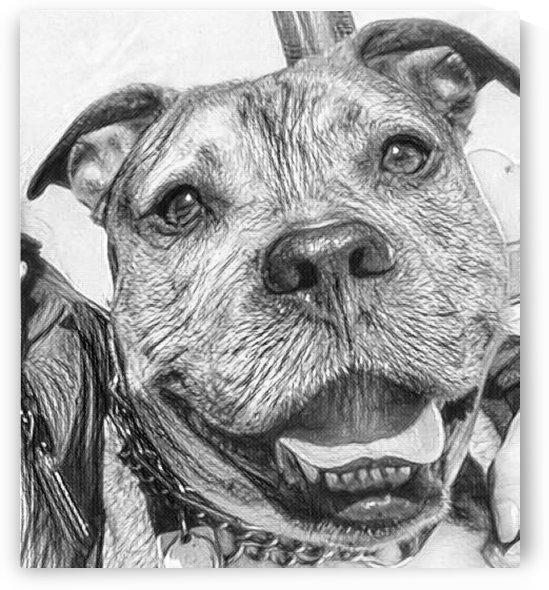 Dog Drawing (30) by NganHongTruong
