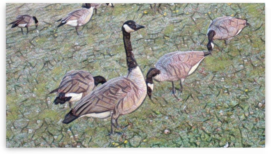 3 Ducks by Ngan Hong Truong