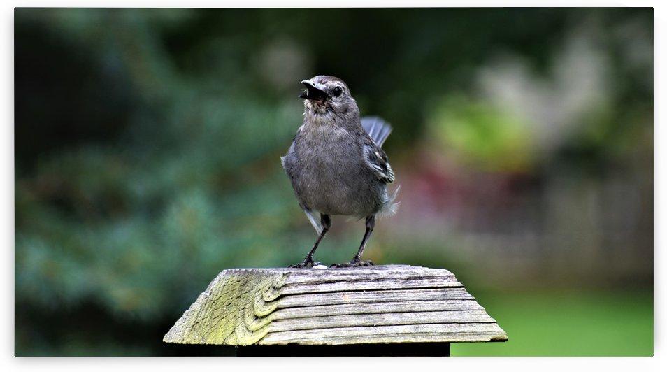 Backyard Bird by Eric Schmitz