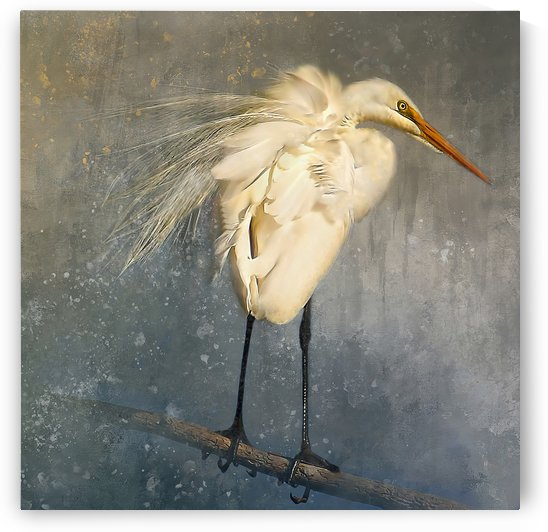 Great Egret Square by HH Photography of Florida
