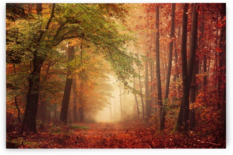 Colorful autumn forest by Zsolt Zsigmond