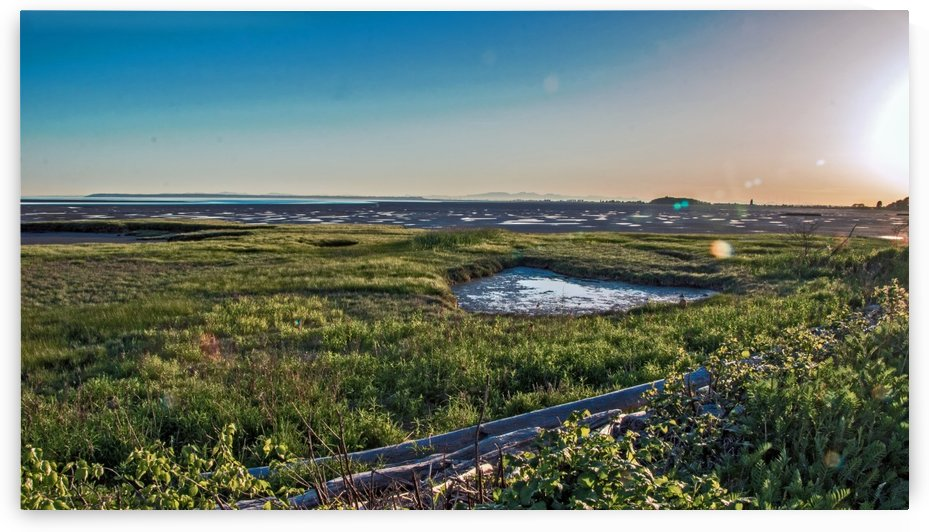 Mud Flats Pond by Michael Snell