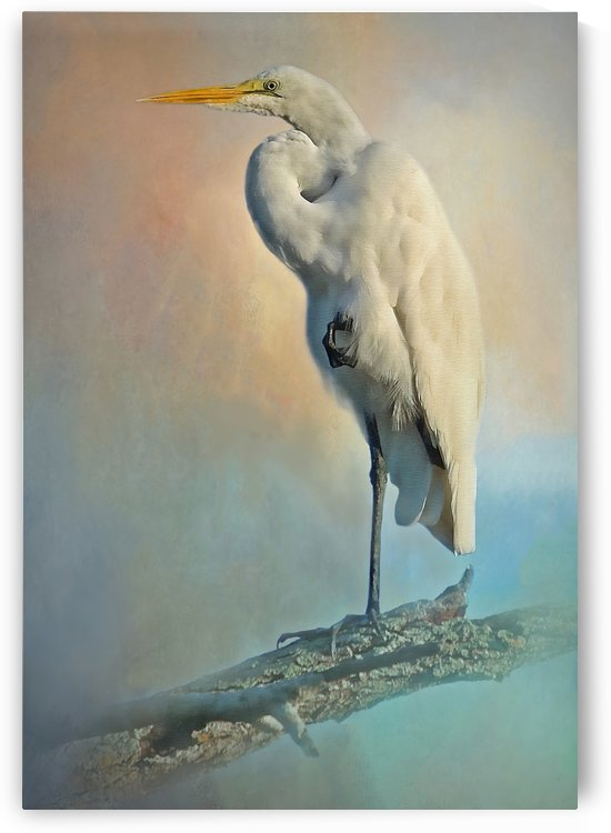 Elegant Egret by HH Photography of Florida