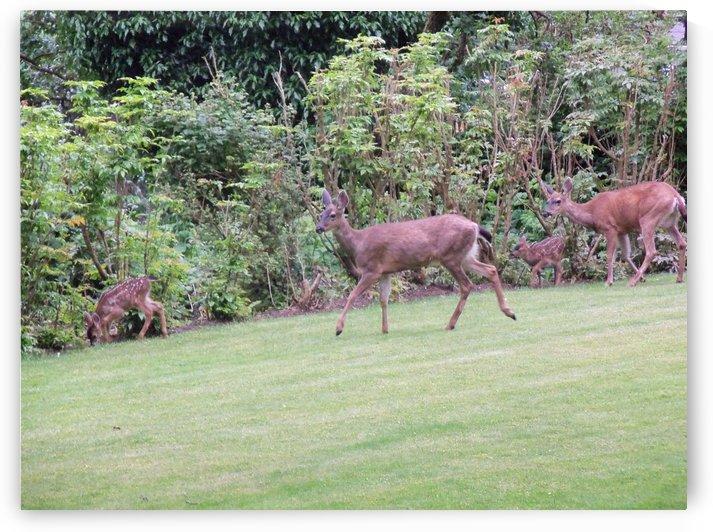 Deer by Keith A Loreth