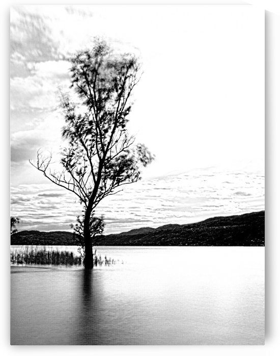 tree in the lake by Luigi Girola