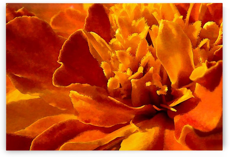 Marigold Macro by HH Photography of Florida