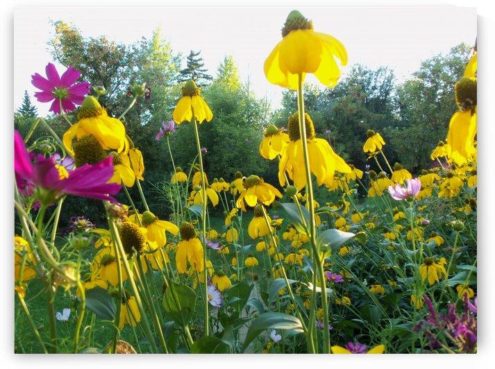Saskatchewan Flowers by Keith A Loreth