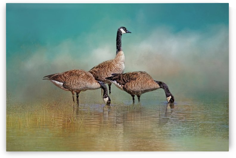 Three Canada Geese by HH Photography of Florida