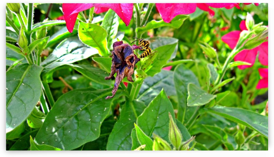 Bee (3) by Ngan Hong Truong