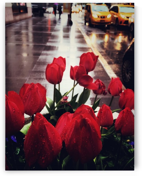 Lillies in NYC by Shalini Mimani