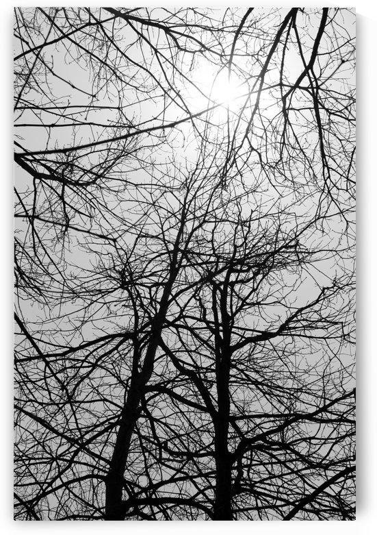 Hazy Spring Sun 050419 by Mary Bedy