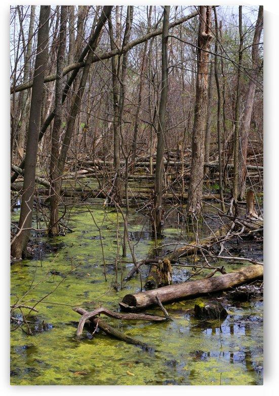 Spring Pond with Algae 2 2019 by Mary Bedy